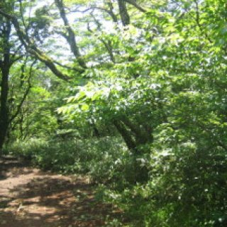 hakone-hike-03