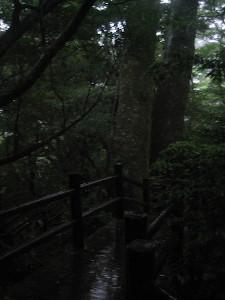 kigensugi-03.JPG