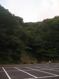 shiratani-p-02.JPG