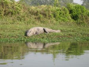 nepal2010-20.jpg