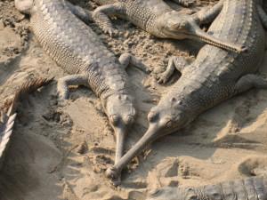 nepal2010-22.jpg