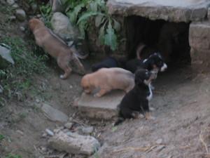 nepal2010-25.jpg