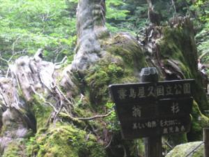 yakushima2016-50..JPG.jpg