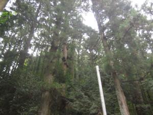 2008-kyuzuryu-02.jpg
