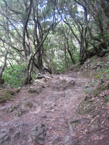 Parque-Rural-Anaga-02.JPG