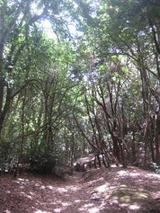 Parque-Rural-Anaga-08.JPG