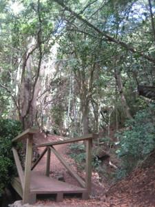 Parque-Rural-Anaga-09.JPG