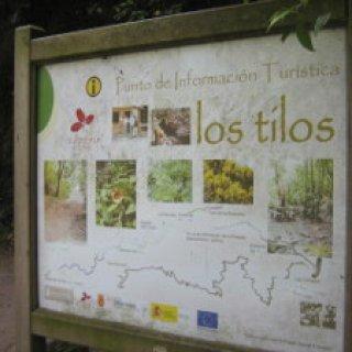 Los-Tilos-01