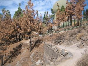 Circular-Llanos-de-la-Pez-R-2-08.JPG