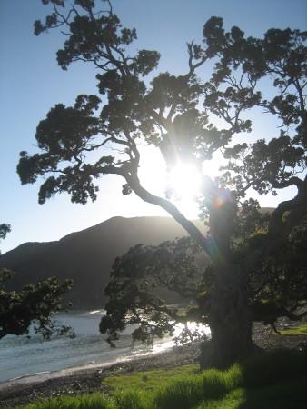 2018-NZ-travel-1363.JPG