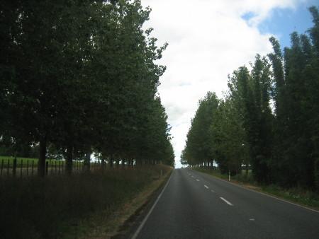 pukethi-forest2-021.JPG