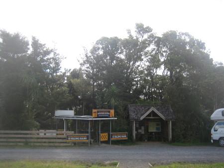 pukethi-forest2-024.JPG