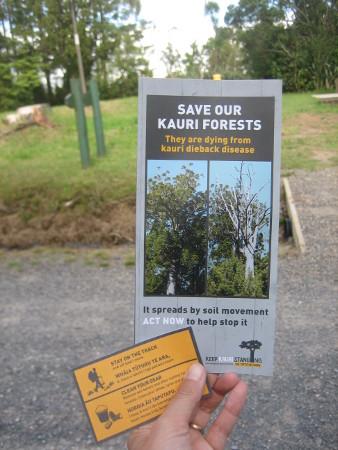 pukethi-forest2-027.JPG