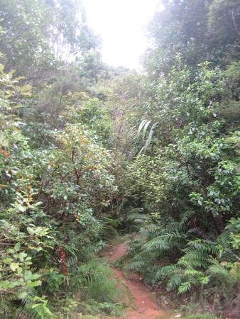 pukethi-forest2-032.JPG