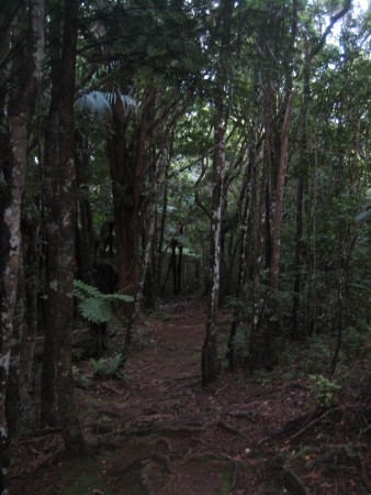 pukethi-forest2-033.JPG