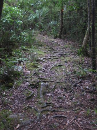 pukethi-forest2-034.JPG