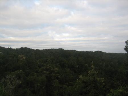 pukethi-forest2-035.JPG