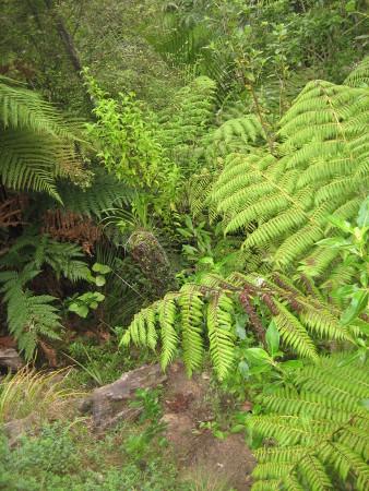 pukethi-forest2-038.JPG
