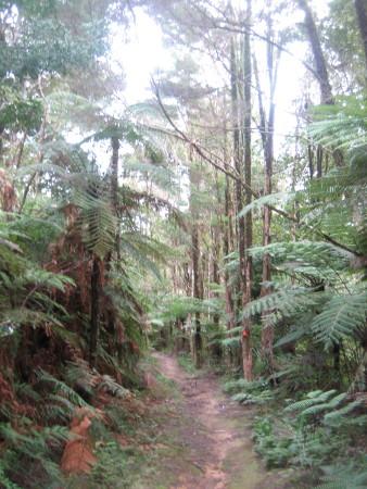 pukethi-forest2-039.JPG