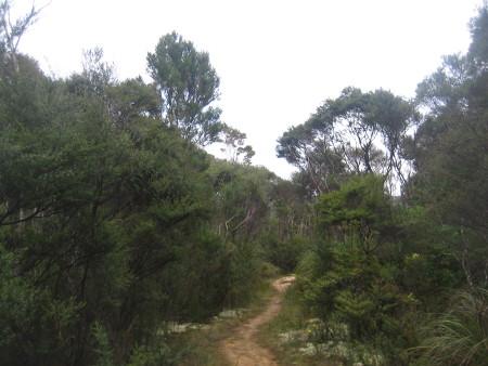 pukethi-forest2-040.JPG