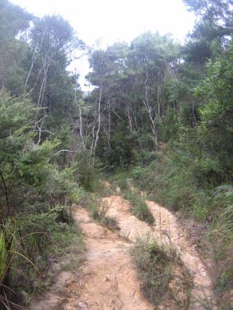 pukethi-forest2-042.JPG