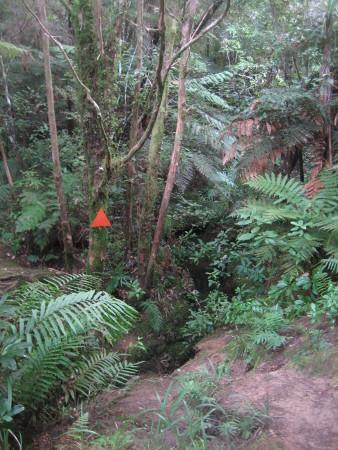 pukethi-forest2-043.JPG