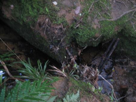 pukethi-forest2-047.JPG