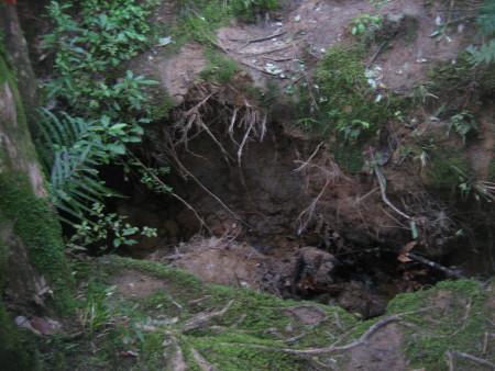 pukethi-forest2-048.JPG