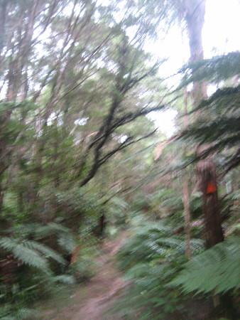 pukethi-forest2-049.JPG