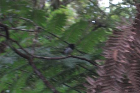 pukethi-forest2-050.JPG