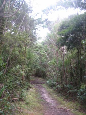 pukethi-forest2-052.JPG