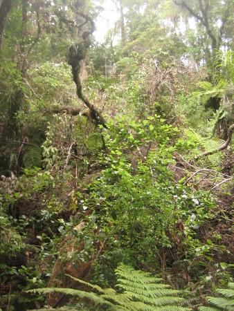 pukethi-forest2-054.JPG
