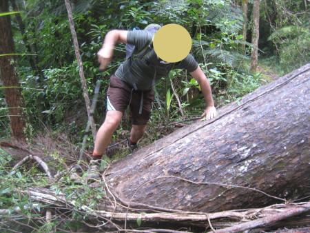 pukethi-forest2-055.JPG