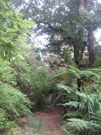 pukethi-forest2-056.JPG