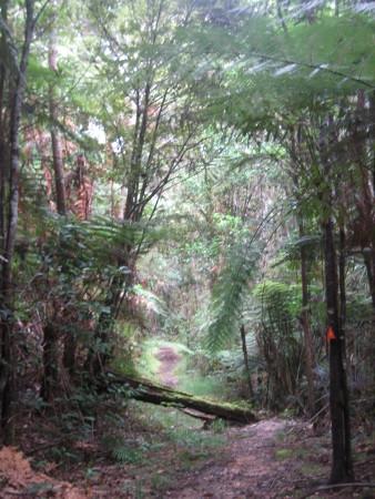 pukethi-forest2-063.JPG