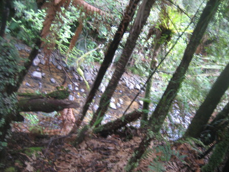 pukethi-forest2-064.JPG