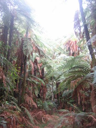 pukethi-forest2-065.JPG
