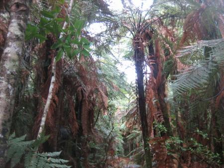 pukethi-forest2-066.JPG