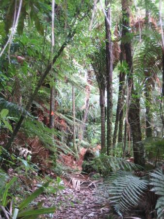 pukethi-forest2-069.JPG