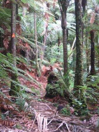 pukethi-forest2-070.JPG