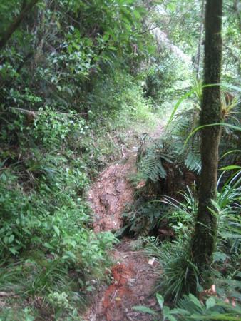pukethi-forest2-072.JPG
