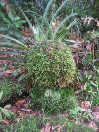 pukethi-forest2-073.JPG