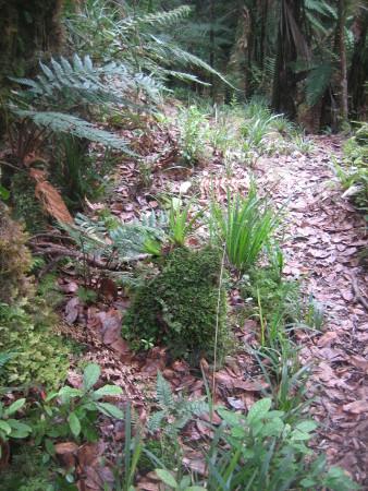 pukethi-forest2-074.JPG