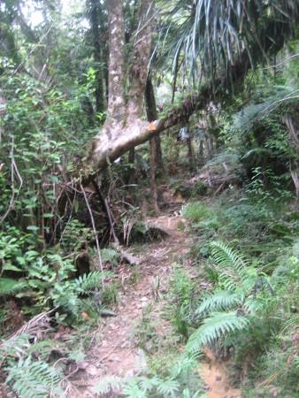 pukethi-forest2-075.JPG