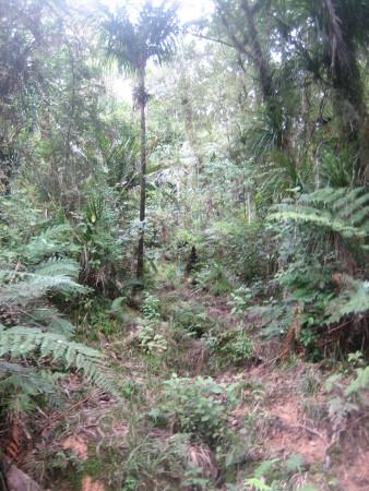 pukethi-forest2-076.JPG
