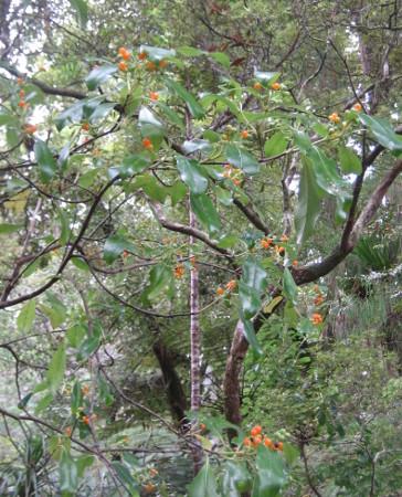 pukethi-forest2-077.JPG