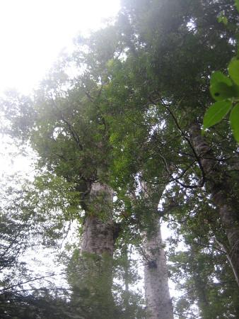 pukethi-forest2-079.JPG