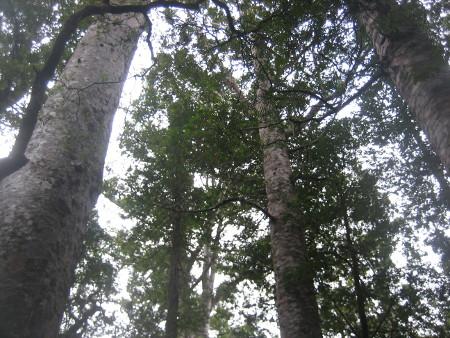 pukethi-forest2-080.JPG