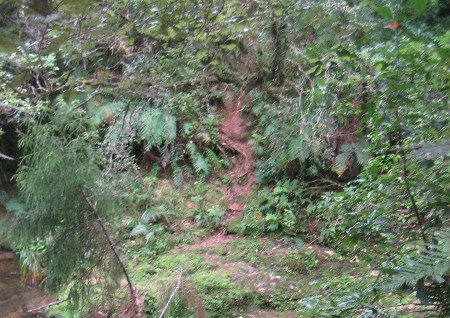 pukethi-forest2-082.JPG