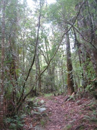 pukethi-forest2-083.JPG